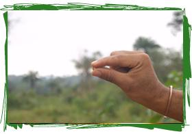 Seeding Peace Kono District